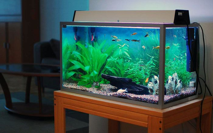 Маленькие, большие, торговые аквариумы