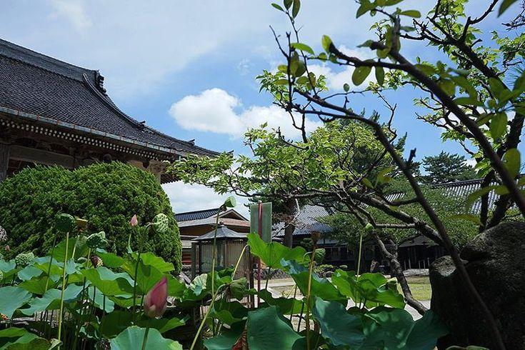 お盆 お盆 お墓参り おはようございます いまそら イマソラ 空 夏の風景 日本の夏 はす 蓮の花 蓮 寺 Lotus Temple Sky お盆 お盆 お墓参り おはようございます いまそら イマソラ 空 夏の風景 日本の夏 はす 蓮の花 Plants Sky