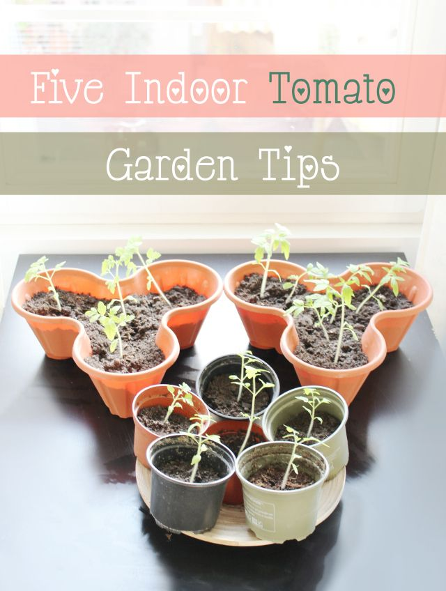 8 best indoor gardening images on pinterest indoor for Indoor vegetable gardening tips
