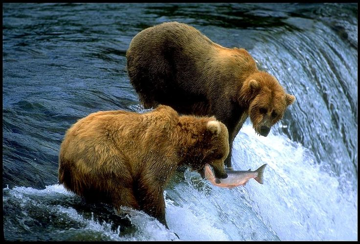 David Suzuki on why the legal grizzly bear trophy hunt in BC, Canada, should enrage us.