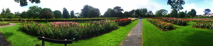 The Rose of Tralee International Festival is one of Ireland's largest and longest running festivals, celebrating 55 years in 2014. There were 6,000 roses in this garden :) photo by Kitty Yntema
