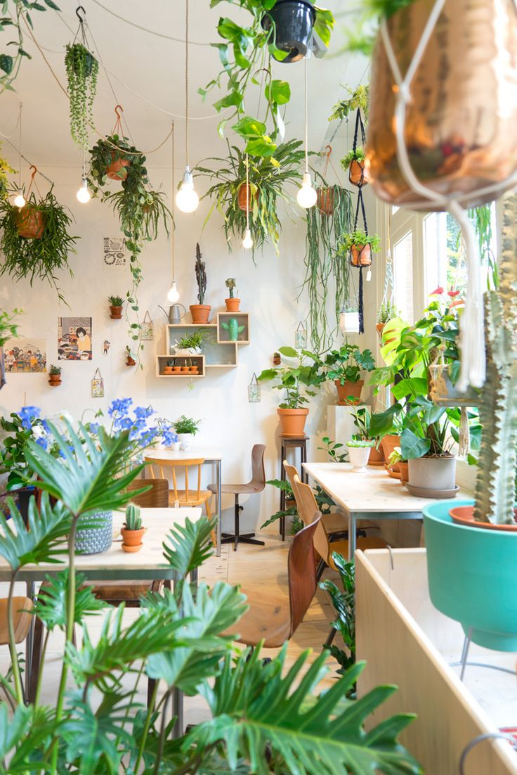 JOELIX.com | Wildernis Amsterdam urban jungle plant shop with lots of hanging plants, leaves, terracotta pots and houseplants