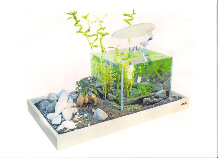 Aquaponics for aquarium for Google fish tank mrdoob