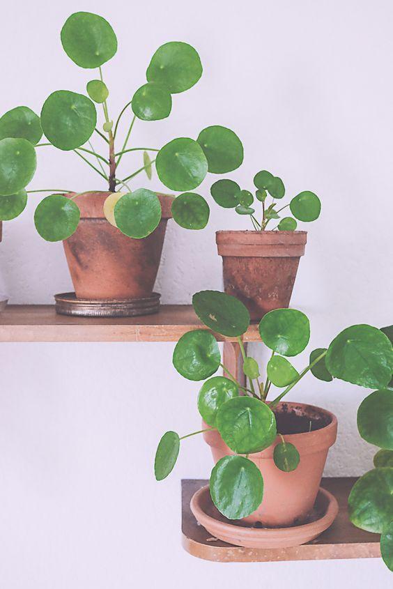 12956 besten urban jungle bloggers bilder auf pinterest zimmerpflanzen g rtnern und. Black Bedroom Furniture Sets. Home Design Ideas