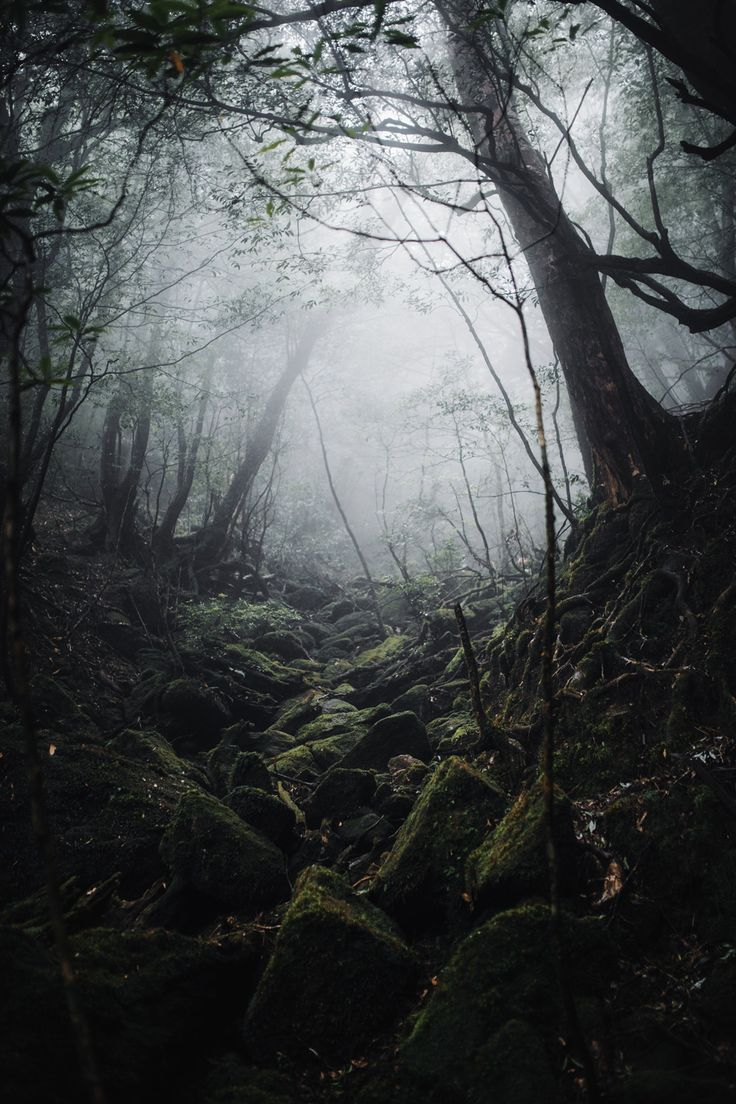 Yakushima Cloud Forest. If you have seen Princess Mononoke this is where they went for inspiration. [10001500] [OC] #reddit