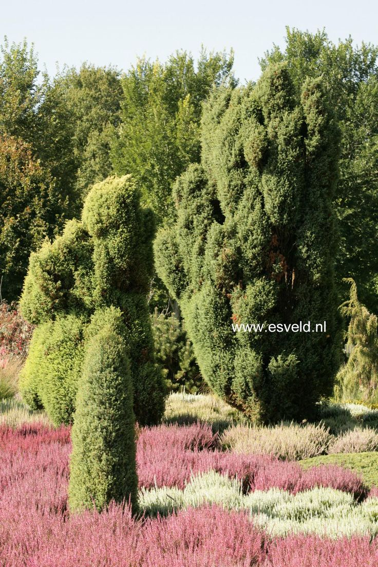 17 best images about okaspuud on pinterest thuja orientalis deer and pine. Black Bedroom Furniture Sets. Home Design Ideas
