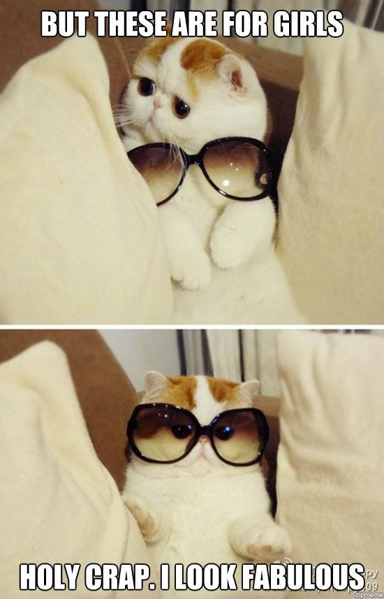 HahahahahaFunny Cat, Cute Cat, Make Me Laugh, Kittens, So Funny, Kitty, Sunglasses, Fabulous, Animal