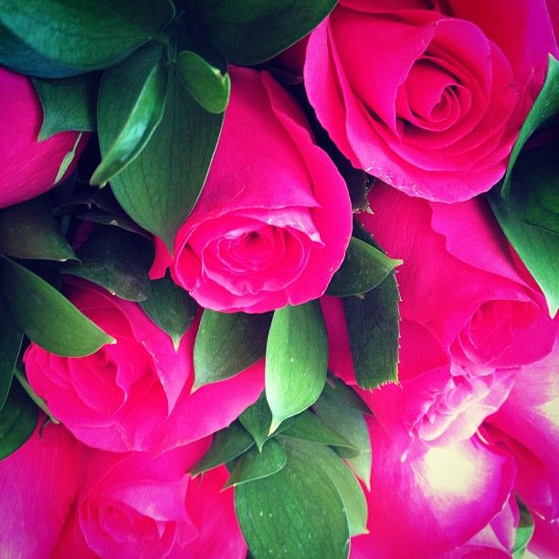 Perfect gift: Hot pink roses @ Francesca Miranda stores