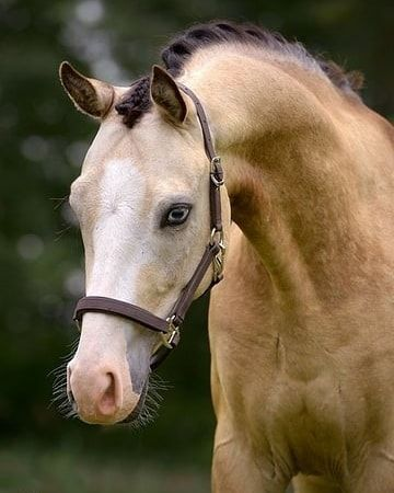 """FOLLOW MY HASHTAG #specialhorseoftheday ------- POST YOUR PICTURE UNDER #specialhorseoftheday AND TELL US WHY YOUR HORSE IS THE SPECIAL HORSE OF THE DAY!  ------- Don't forget to follow@special.horse.of.the.dayfor more ❤️❤️. TAG AND SHARE WITH YOUR FRIENDS ------- COMMENT """""""" IF YOU LOVE THIS❤️ ------- Credit to: unknown (please dm me so I can give you credit) ------- #horse#horses#horsepower#horselover#lovehorse#beautiful#horse#horseman#horsestagram#horsey#horseart#horseri..."""