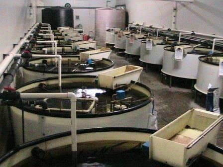 Aquaculture Training Courses We offer several Aquaculture & Aquaponics Courses: 4-day Aquaculture System Management Course. 10-day Tilapia Farming Course. 2-day Commercial Aquaponics Course. We also run dedicated Courses for clients on specific topics, with or without SETA accreditation. For example, we have been approached to run a Water Quality Course with SETA accreditation. Let us know what your needs are and we will see how we can assist you.