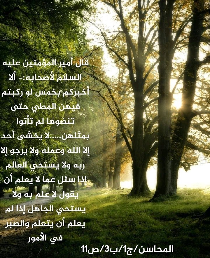 Pin By Abomohammad On أحاديث أهل البيت عليهم الصلاة والسلام Proverbs Quotes Plants Tree