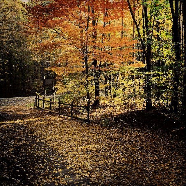 Poland, autumn http://instagram.com/asieka77