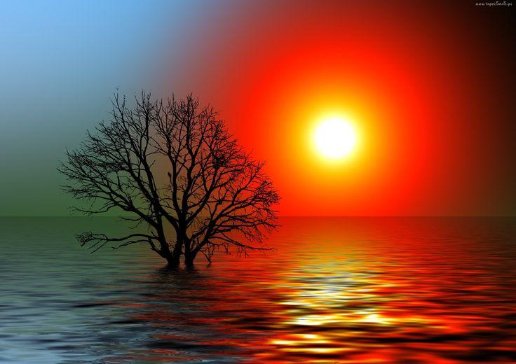 Jezioro, Słońce, Niebo, Odbicie, Drzewo