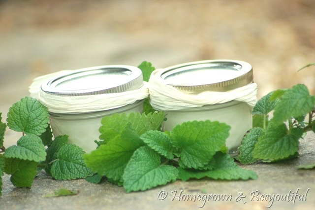 homemade toothpaste - this one is simple: just baking soda and coconut oil - those seem to be the two stable tooth care ingredients. She also adds an essential oil (spearmint): Homemade Coconut, Coconut Oil Toothpaste, Simple Homemade, Stables Tooth, Essential Oils, Baking Sodas, Oil Spearmint, Sodas Coconut, Homemade Toothpaste