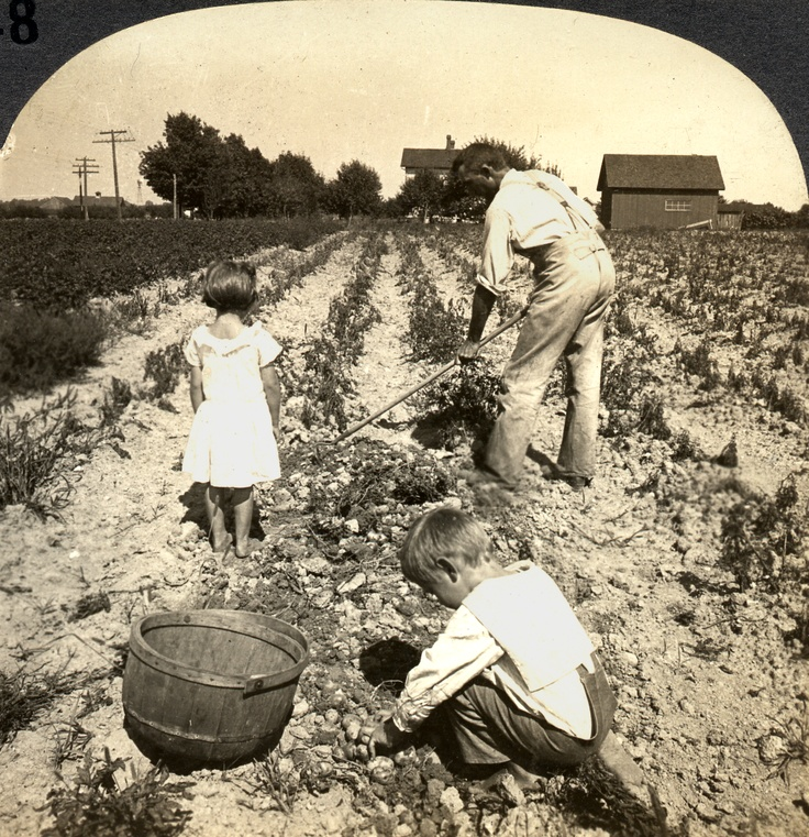Farming Early America Late 1800 S Looks To Be Digging