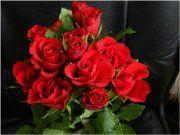 Ruže patria k vôbec najčastejšie sadeným rastlinám, ktoré sa vyskytujú na záhradách pri rodinných domoch. Ako zazimovať ruže?
