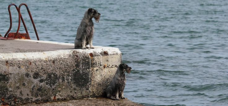Header image of two dogs looking out to sea from a pier.