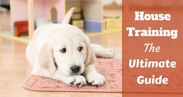 House training the ultimate guide written beside a golden retriever puppy