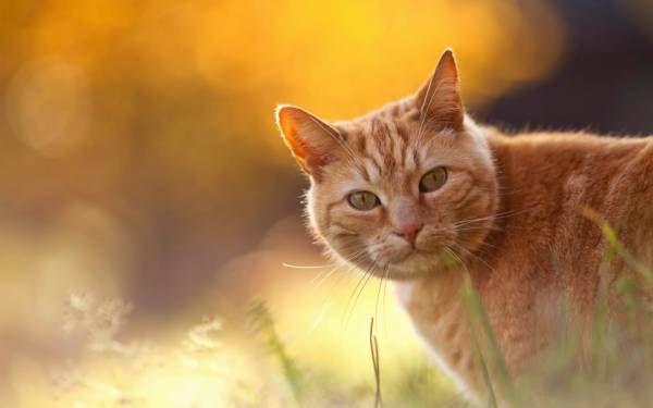 猫のきれいな画像を貼るよー(続き6) : ハムスター速報