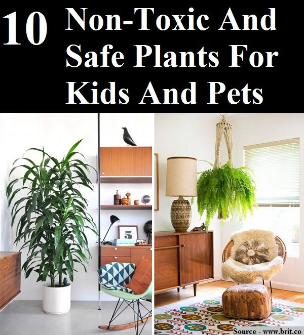10 Non Toxic And Safe Plants For Kids And Pets Home And