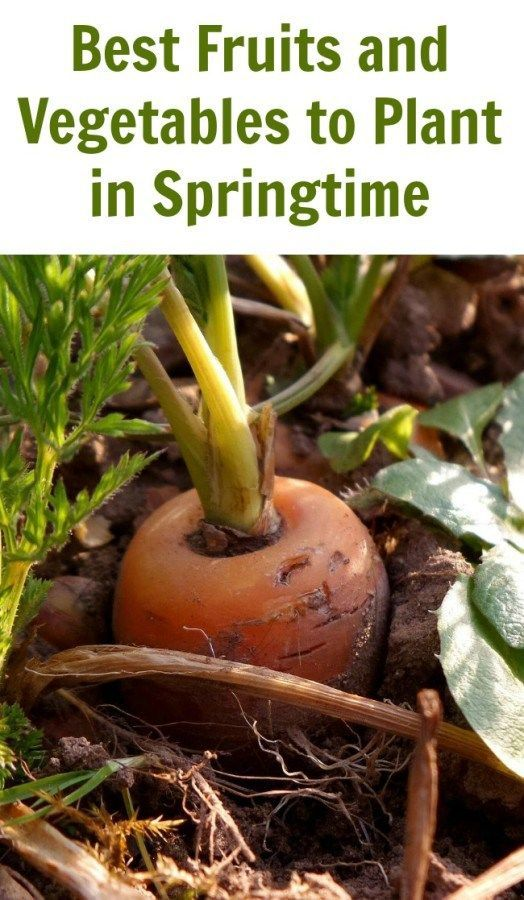 Best Fruits and Vegetables to Plant in Springtime