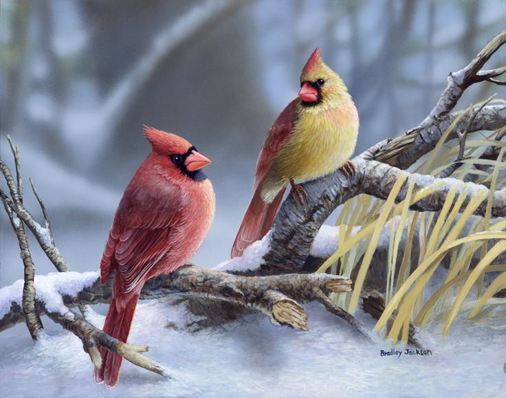 "art by bradley jackson images | Cardinals at Dusk "" Original Painting by Bradley Jackson:"