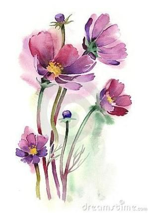 Watercolor -Cosmos flowers- by shari