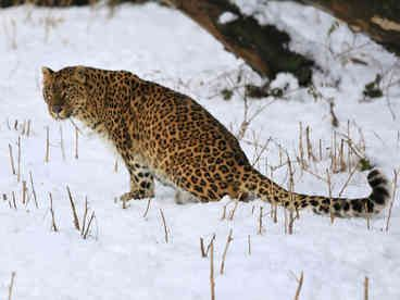 A 56-year-old Indian woman is recovering in hospital after killing a leopard that attacked her..