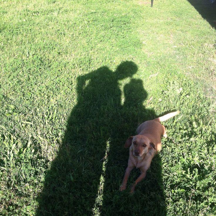 Canela a la sombra