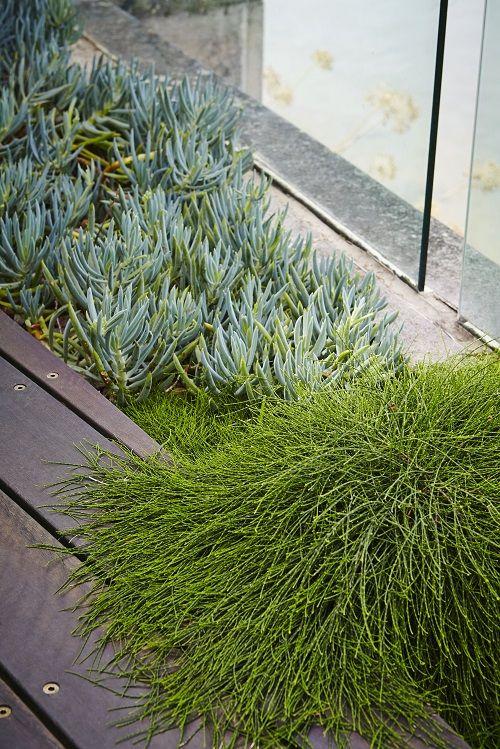 Landscapers, Landscape Design Company | Harrison's Landscaping, Sydney NSW |   Drummoyne