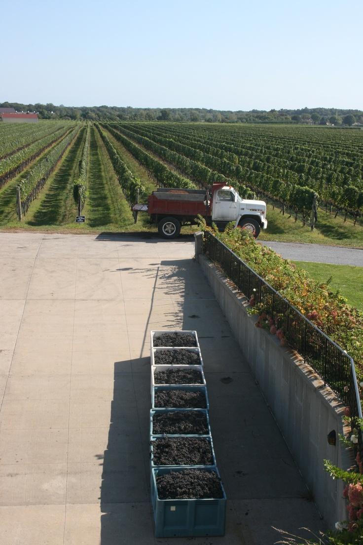 Long Island NY vineyards