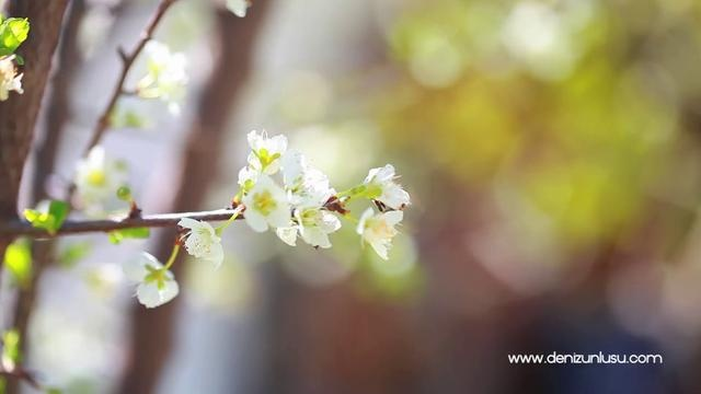 video   the beautiful nature of Turkey...flowers ... you will feel the spring when you watch it:)  http://denizunlusu.com/