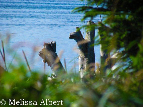 Melissa Albert Photography by MelissaAlbertPhoto on Etsy