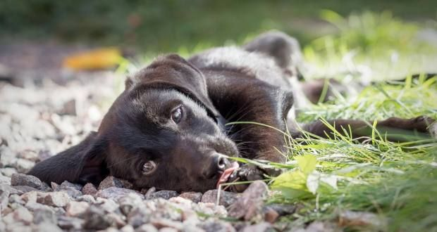 Puppy Sounds – How To Stop Unwanted Puppy Barking, Howling or Crying