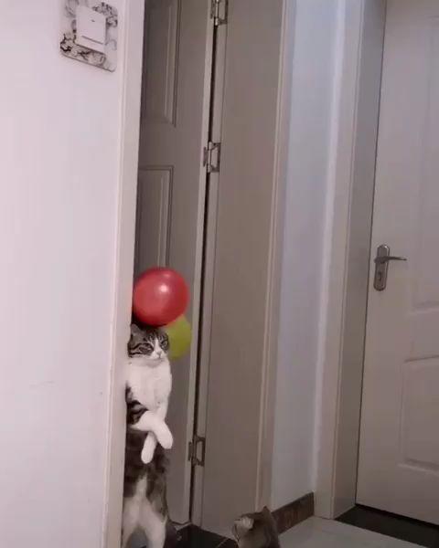 Flugzeit   – CAT Videos