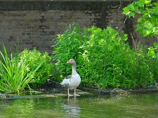 PAM - een floatland ofte drijvend eiland of drijvende tuin