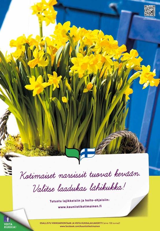 Kauniisti kotimainen - Narsissit tuovat kevään 2012