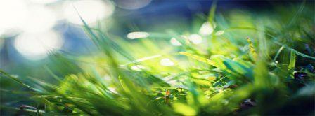 Spring Macro Green Grass Facebook Covers - Facebook Covers - FBcoverlover.com/maker