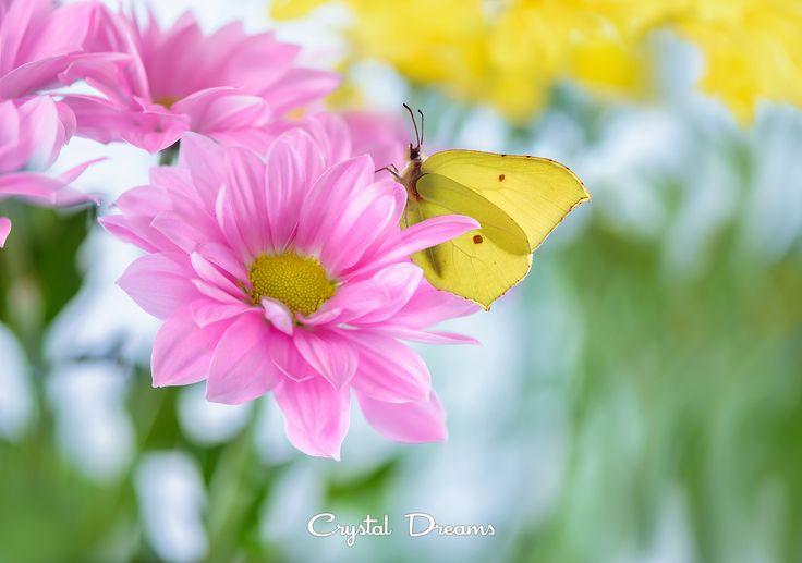 """Floral fotopastel"" by Tatiana  Krylova on 500px"