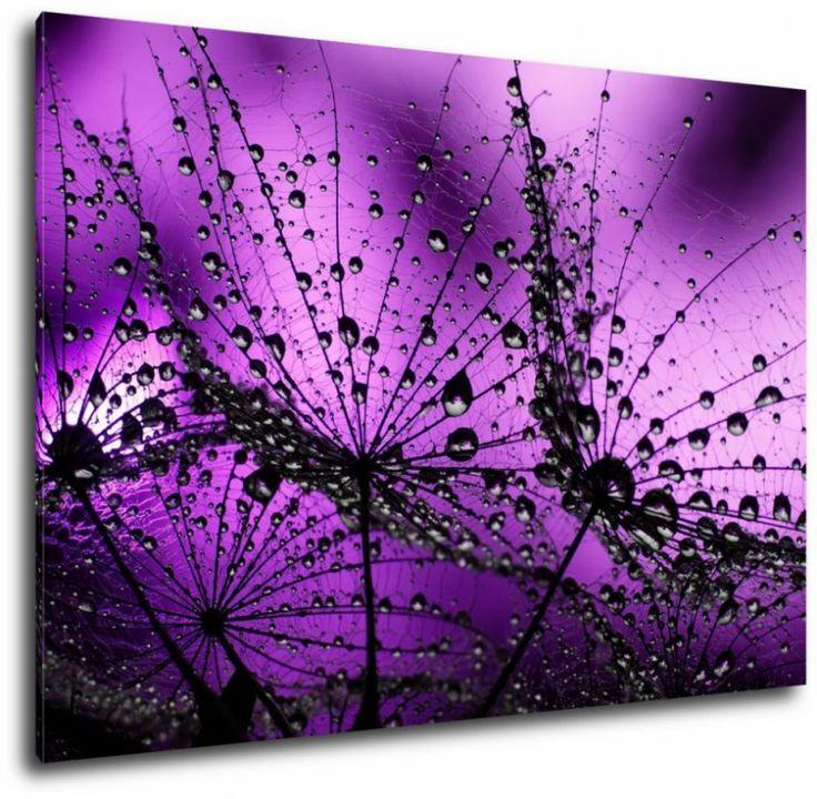 Obraz dmuchawce w fiolecie