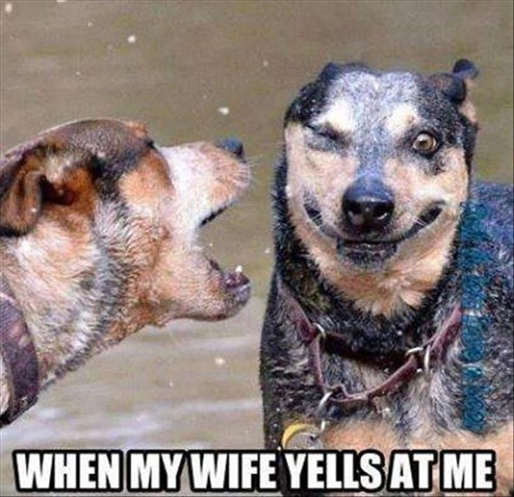 Funny Animal Pictures Of The Day - 26 Pics