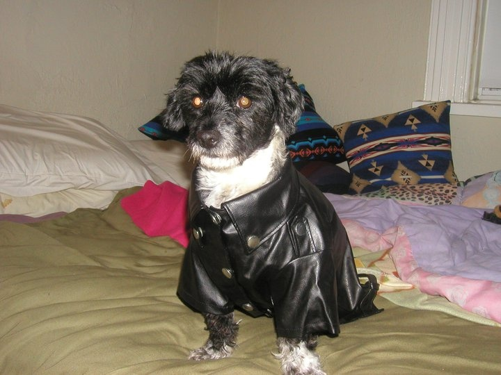 Layla trying to be butch with her biker jacket  $20