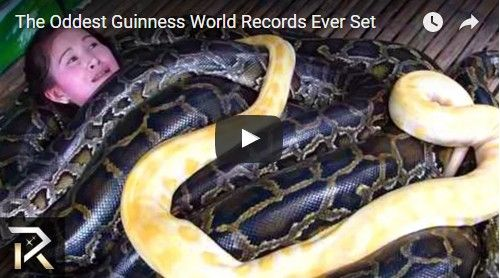 Beautifulplace4travel: The Oddest Guinness World Records Ever Set