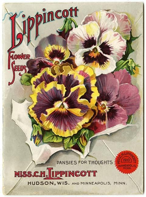 "A bouquet of pansies burst through a mailing envelope on the 1910 Carrie Lippincott catalog cover. Carrie Lippincott, the self-proclaimed ""pioneer seedswoman"" and ""first woman in the flower seed industry"" established her mail-order flower seed business in Minneapolis in 1891."