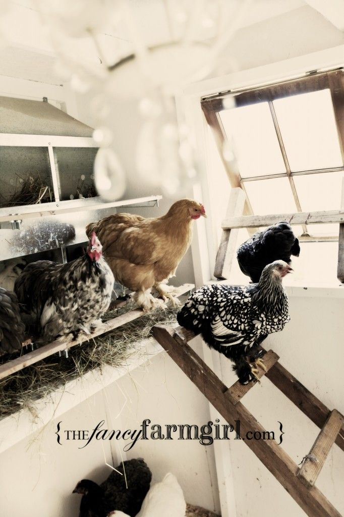 a fancy shmancy chicken coop :) this girl is unreal. Maybe I need to go to Seattle and see this in person.