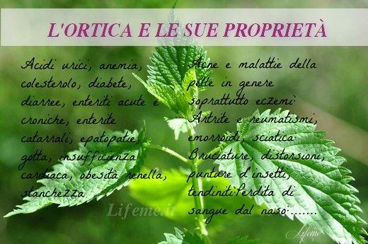 Le dieci proprietà di questa pianta urticante ma benefica per la nostra salute dall'ipertrofia prostatica,anemia,alcalinizzante,dermopurificante..ottimo rimedio per i capelli