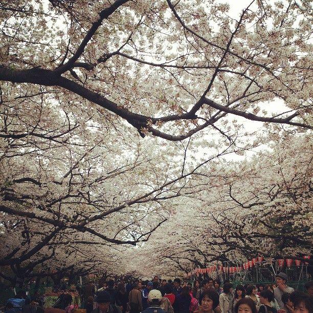上野恩賜公園 in 台東区, 東京都 Ueno Park.