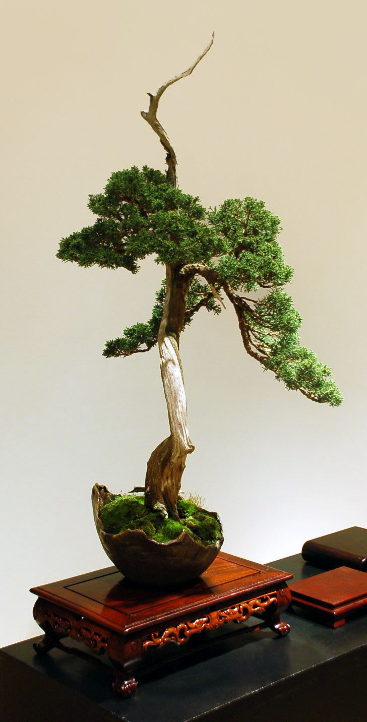 Bonsai from the Garden's 2015 Open Pavilion event