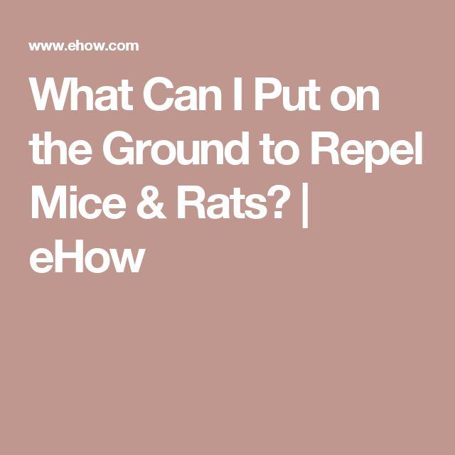 die besten 25 how to deter mice ideen auf pinterest m use abwehrspray m use steuer und. Black Bedroom Furniture Sets. Home Design Ideas