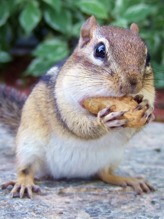 Best The Wonderful World Of Twiggy Images On Pinterest Twiggy - Adorable chipmunks go on playful adventures with lego star wars toys